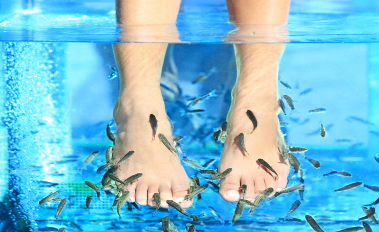 Fish p dicure pour 2 personnes institut a vos soins for Fish pedicure price